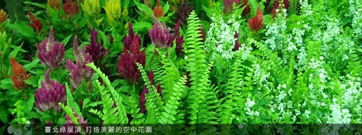 3-臺北綠屋頂_打造美麗的空中花園
