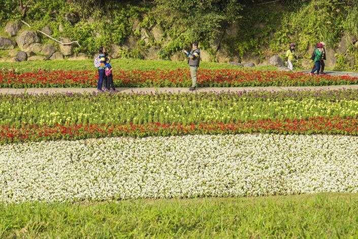 內湖的大溝溪生態治水園區,儼然是臺北市的賞花秘境