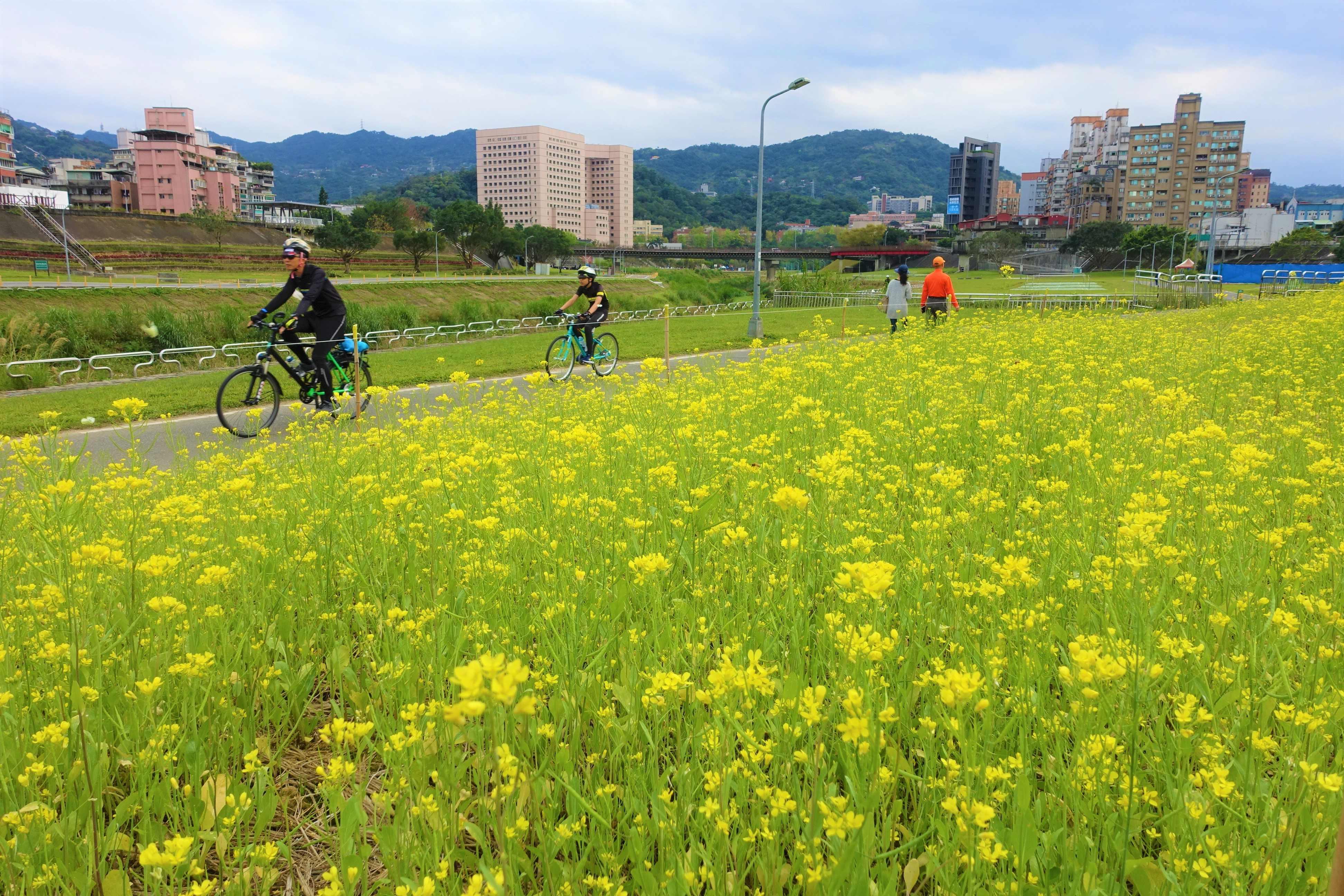 單車賞花行 道南河濱公園油菜花開