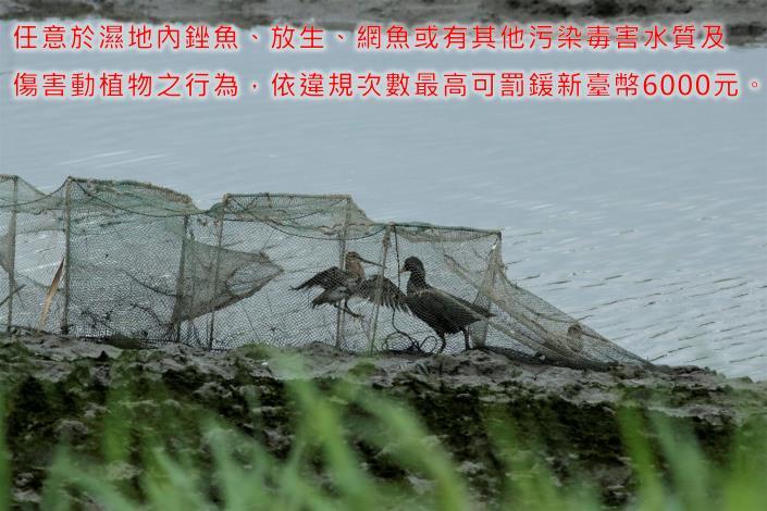 若任意於濕地內銼魚、放生、網魚或有其他污染毒害水質及傷害動植物之行為,依違規次數最高可罰鍰新臺幣6000元