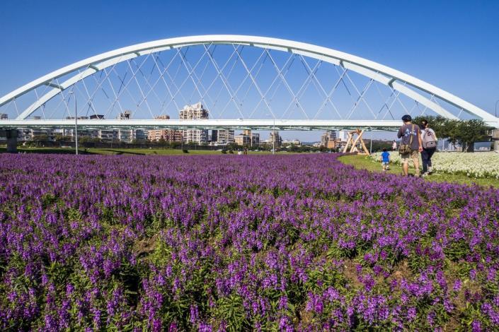 彩虹河濱花海紫、白色系花海 宛如仙境