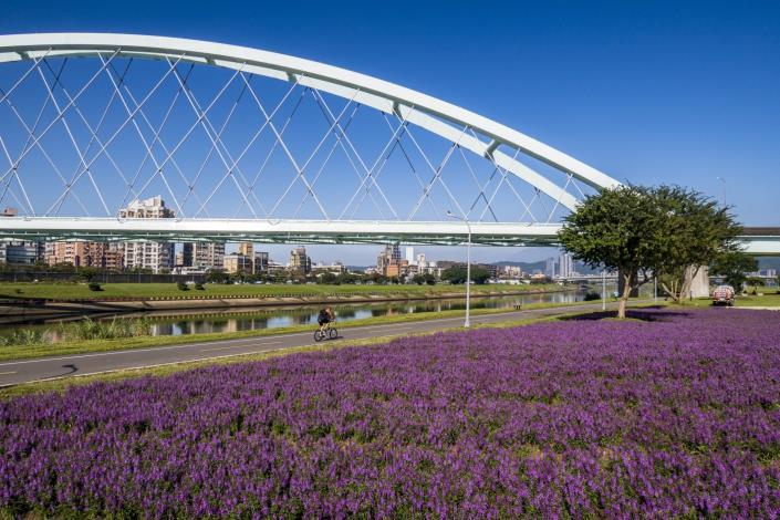 彩虹河濱花海紫色花海 仙氣爆表