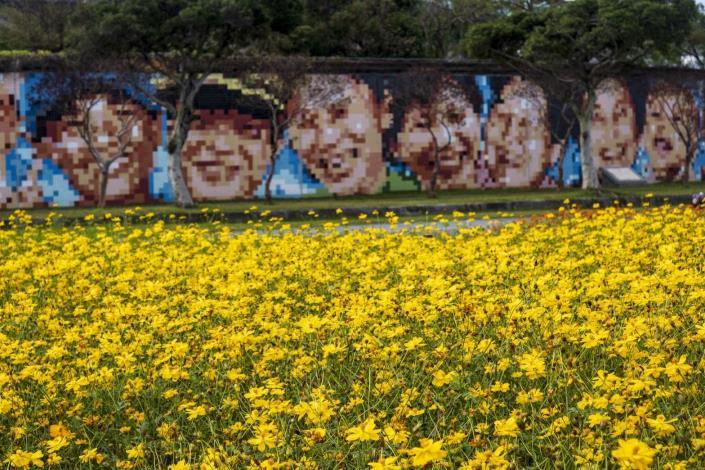 大佳河濱公園花海,可觀賞至明年1月中旬。