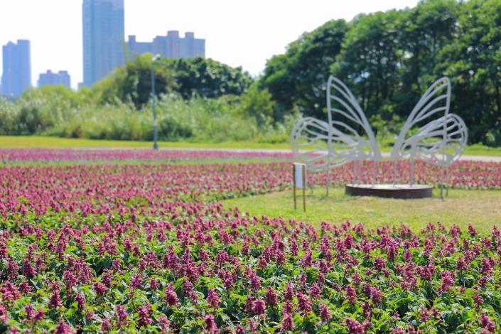 古亭河濱花海 蝶翼造型的不鏽鋼裝置藝術 打造拍照點