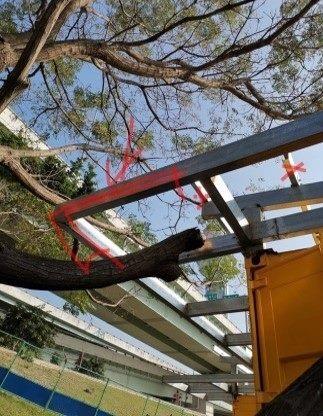以尊重環境為原則,切除屋簷的一角保留樹枝生長的空間