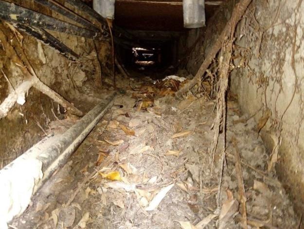 道路兩旁的樹根會竄根至側溝 導致側溝結構體損壞