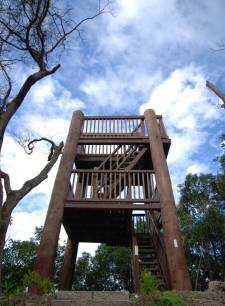 巨木瞭望台