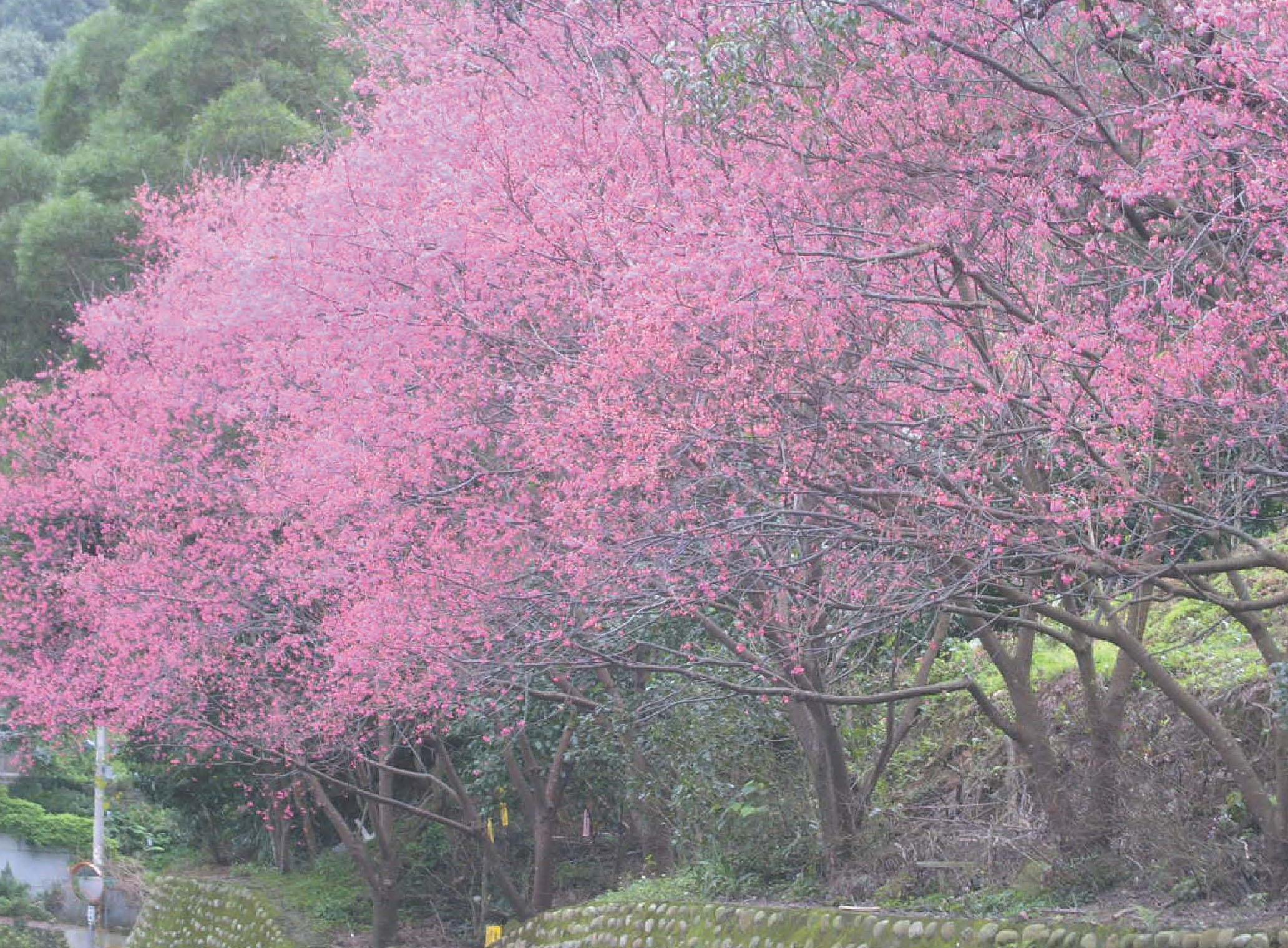 杏花林休閒農場