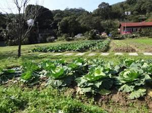 園區也提供健康蔬果