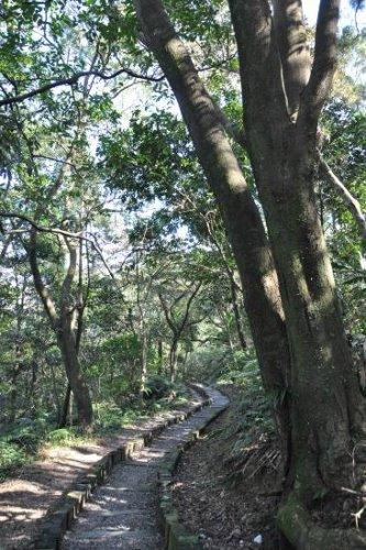 綠蔭下的枕木碎石步道