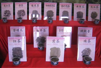 Samples of Tea