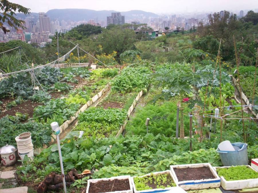 北投區第五市民農園