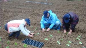 大安區農會申請輔導成立的第一市民農園。