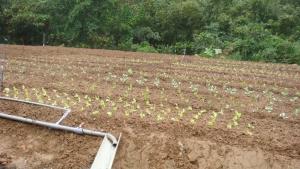 大安區第一市民農園