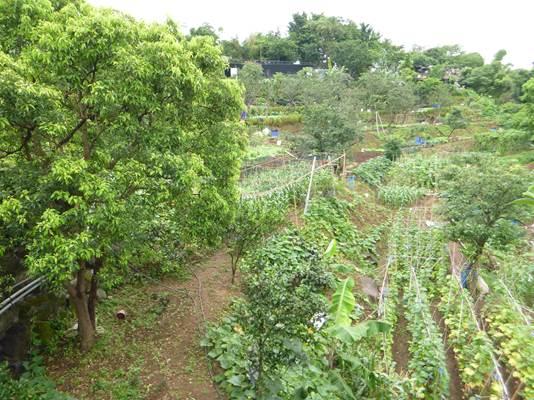 種植各項蔬菜