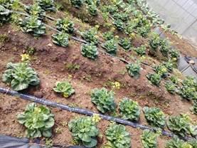 一方市民農園3