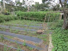一方市民農園4