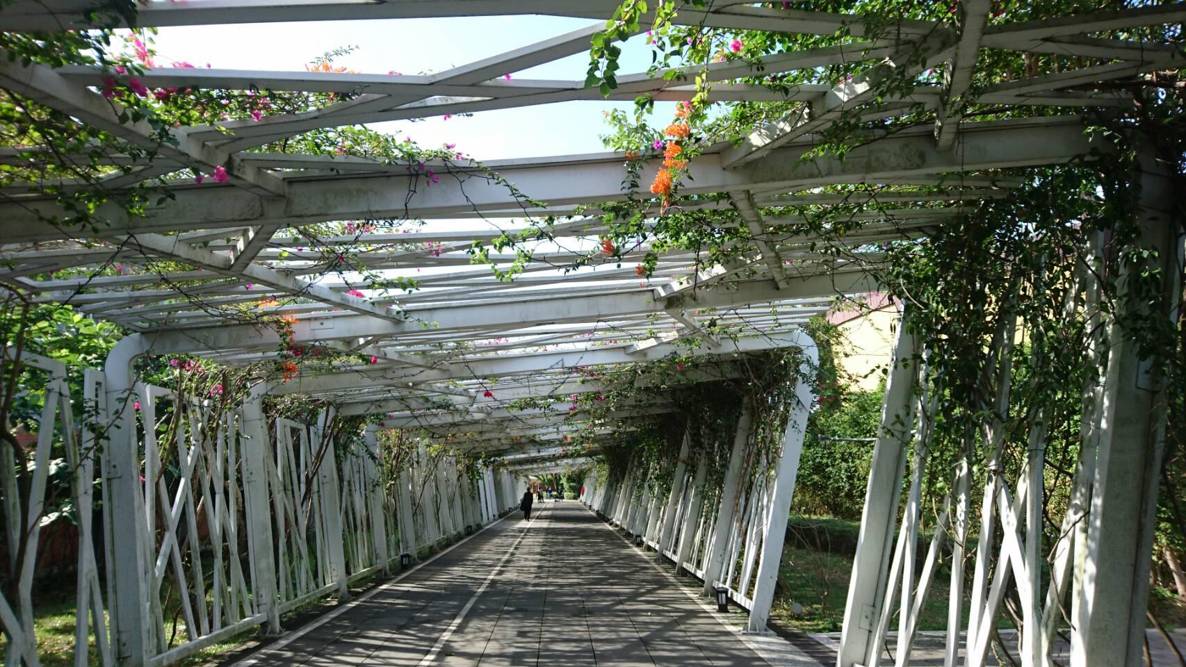 圖6、光影交錯的花之隧道,景深效果佳是攝影家愛好的景點。