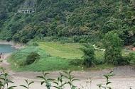 渡南橋植物緩衝帶B1區照片