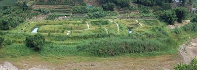 渡南橋人工濕地照片(93年、94年、95年)