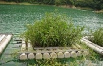 小格頭人工浮島照片(93年)