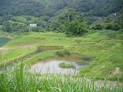 灣潭人工濕地照片(93年)