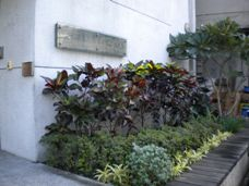 恆安門口花圃照片