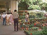 建國花市圖片