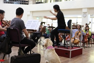 2. Well-trained pets make the perfect audience during concert rehearsals.