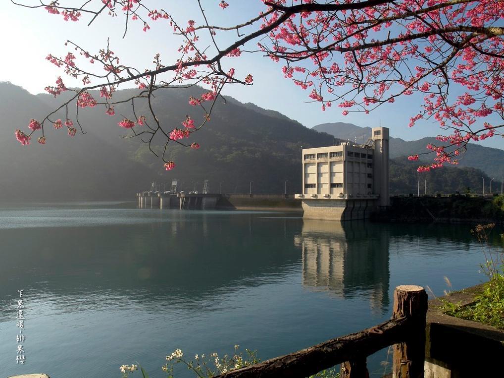 水庫的湖光山色因山櫻花更顯出色