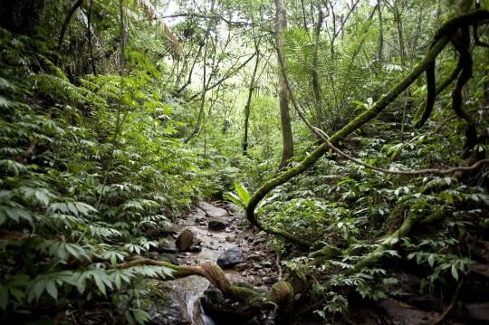 圖3、食蛇龜棲息之低海拔森林環境。