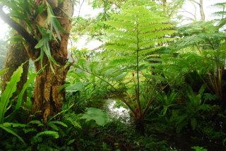 蕨園內豐富的蕨類植物