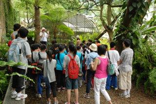 民眾參觀蕨園