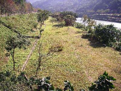 一號橋旁草帶照片(97年)