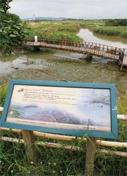 關渡自然公園包括大片的草澤、水塘、水筆仔純林、河口泥灘地,生態相當豐富。