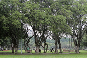 綠樹成蔭的青年公園是市民運動休閒的好去處,每日到此運動的民眾多達上萬人,是使用率極高的都會公園。