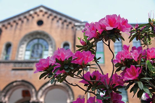 Taipei City Government works with National Taiwan University to create a City of Azaleas in springtimeTaipei. (Photo: Wang Nengyou)