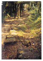 樟山寺步道