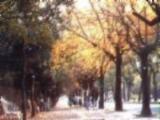 中山區街道觀景圖