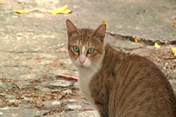 社區內已絕育街貓