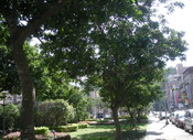 公園翦影2