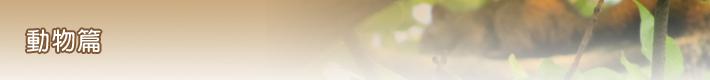 動物篇-banner