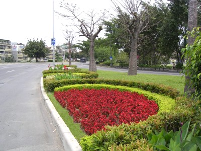 Flowers Blooming along the Streets (I)