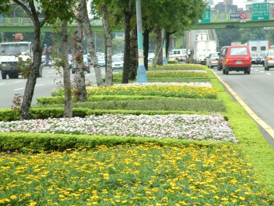 Flowers Blooming along the Streets (II)