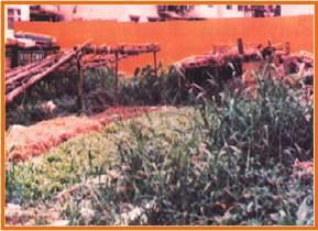 中山區第一期重劃前,雜草叢生,地籍紊亂之一