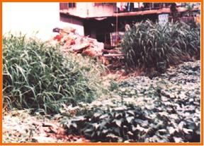 中山區第一期重劃前,雜草叢生,地籍紊亂之二