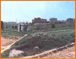 中山區第二期重劃前,種植農作物,土地利用價值低之一