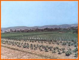 中山區第二期重劃前,種植農作物,土地利用價值低之二