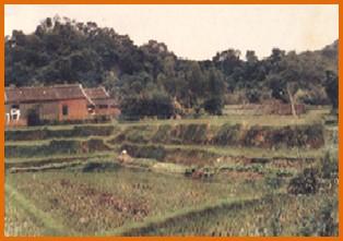 內湖區第一期重劃前,大部分為農地,低矮房舍座落其間之二
