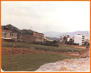 內湖區第三期重劃前,種植農作物,土地無法集中利用之一